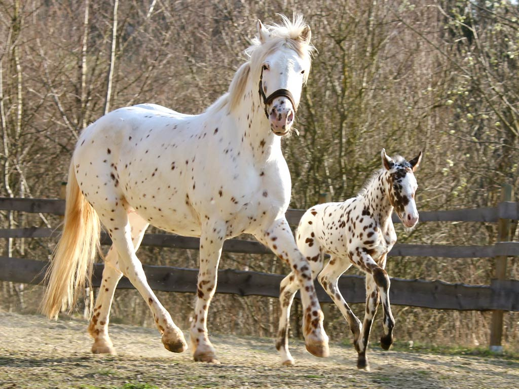 how many horses are in the world photo - 1
