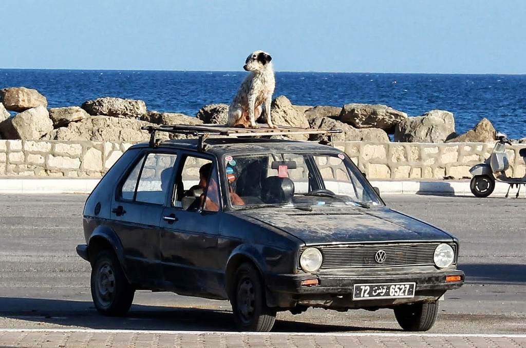 how many dogs are in the world photo - 1