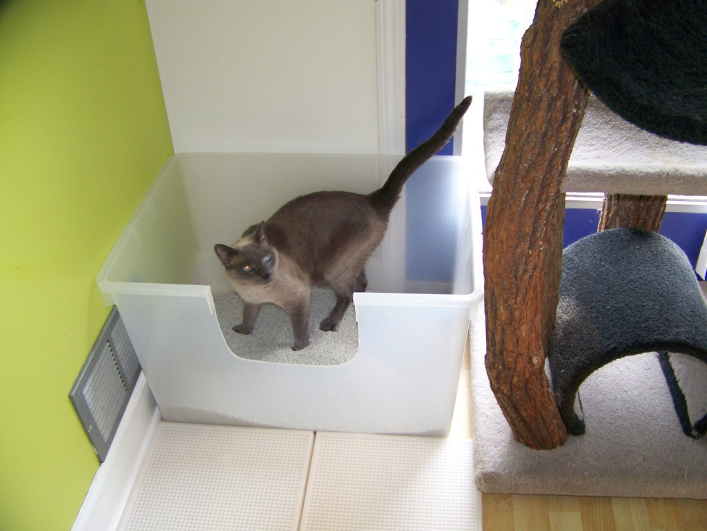 how many litter boxes per cat photo - 1